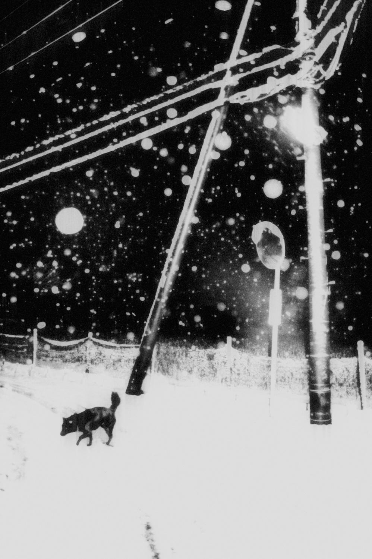 Hajim Kimura_Snowflakes Dog Man 10
