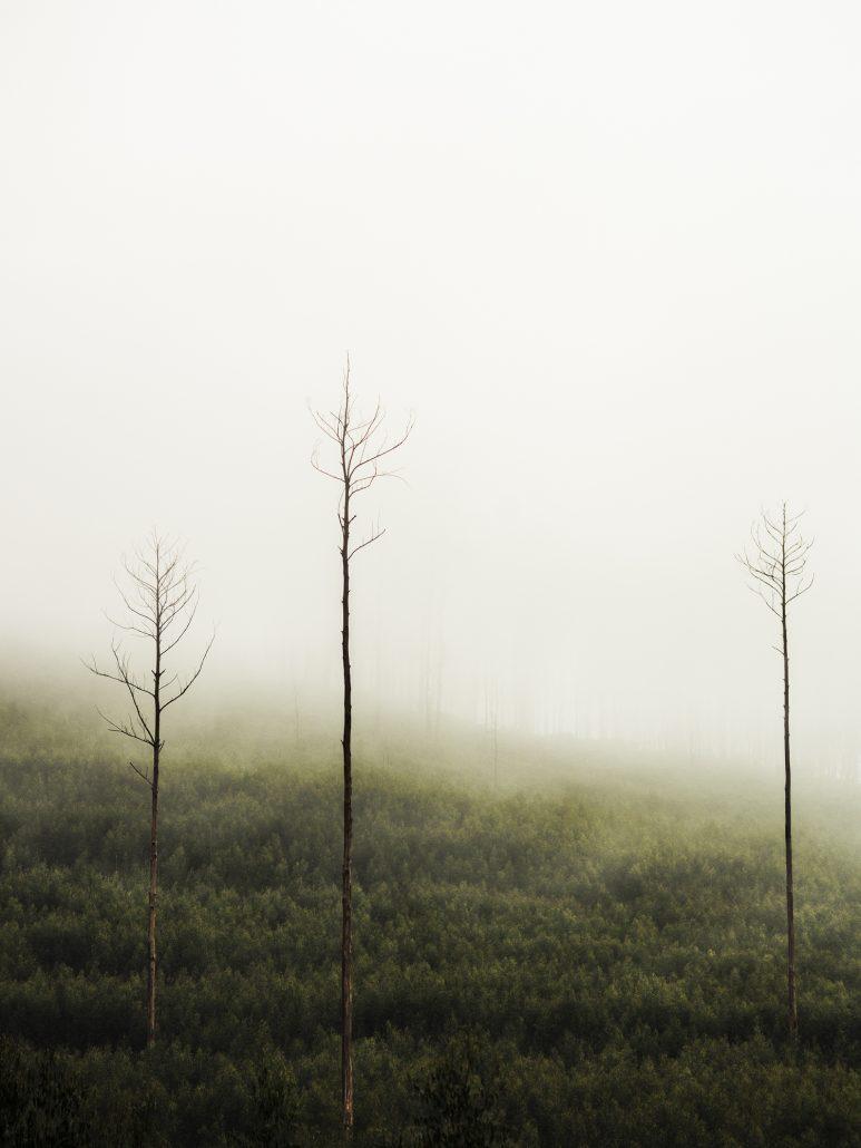 'The Mist' - Image by Stella Nguyen